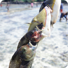 Scareline fishing – Tarasag, Gaua, Banks
